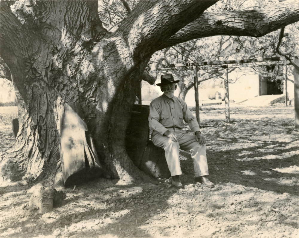Juventino del Valle and the black walnut tree. Juventino (1841-1919) was the eldest child of Ygnacio del Valle. He served as ranch manager from 1862-1886. The tree in the photograph is the signature black walnut tree of Rancho Camulos Museum that survived into the 21st Century.